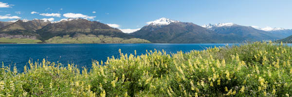 Lake Wanaka Lupins Photograph for Sale as Fine Art.