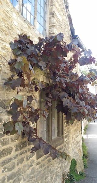 Grapes on the Wall in Wiltshire