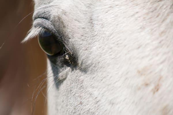 White Horse Eye, Damon, Texas