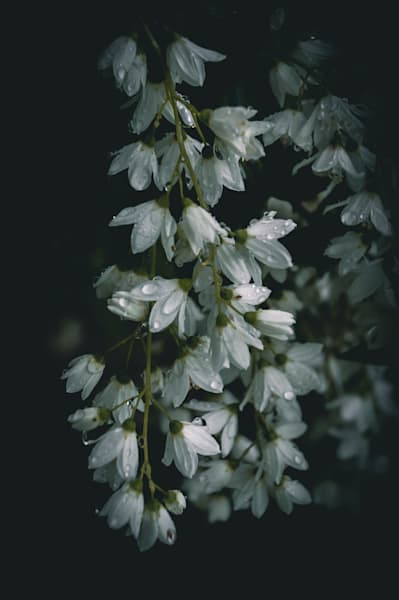 Moody Flowerettes