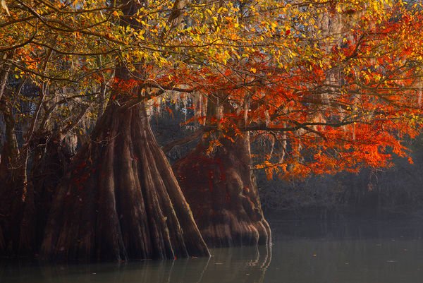 Cypress Trees of Northwest Florida | Fine Art Prints on Canvas, Paper, Metal, & More by Waldorff Photography