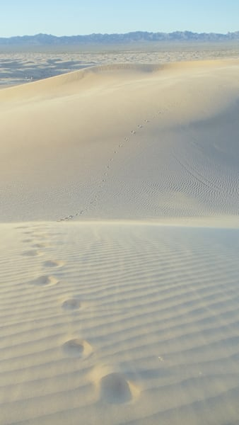 Lone Footprints in the Sand