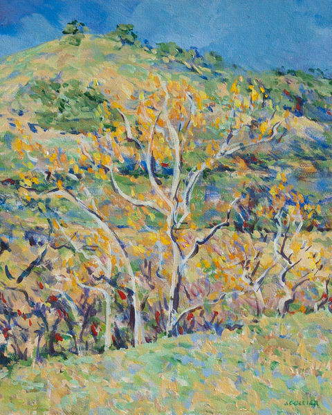 California Hillside with Winter Sycamore Trees