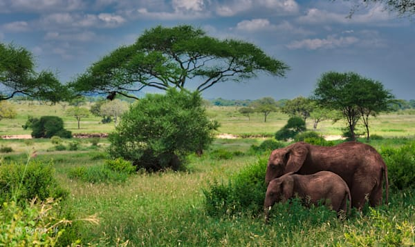 Fine art photograph of two elephants in a lush Serengeti landscape.