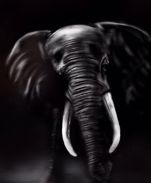 Elephant Art | Dave Fox Studios