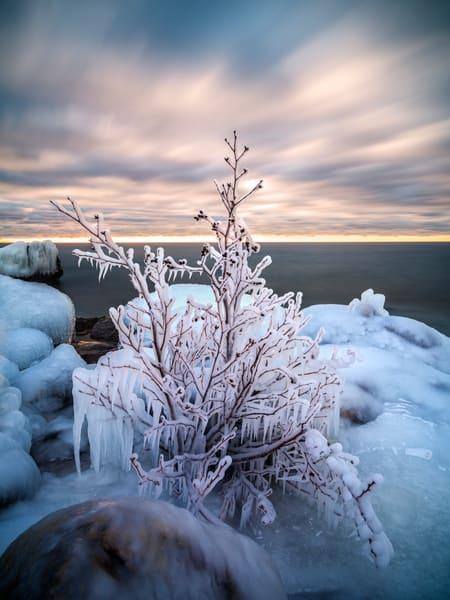 Ice-coated tree along Lake Superior