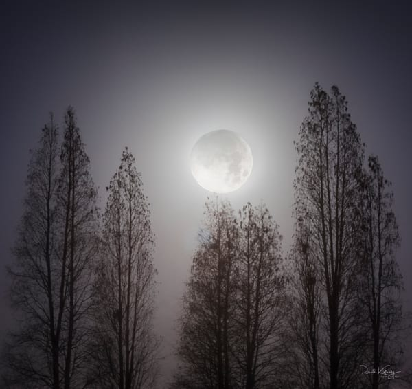 Cypress Super Moon Photographic Art
