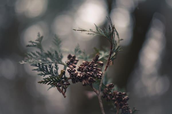 Cedar Seeds Photography Art | Sage & Balm Photography