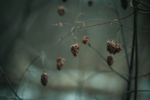 Draped Weeds Photography Art | Sage & Balm Photography