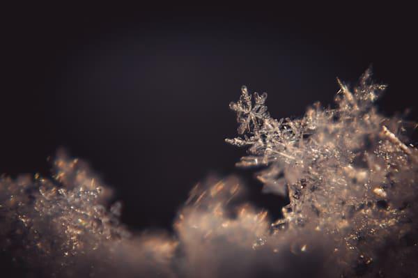 Fractals Photography Art   Sage & Balm Photography