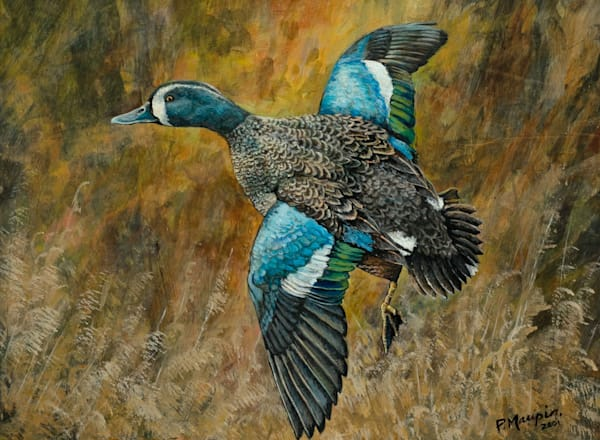 Blue Winged Teal Art by Pete Maupin