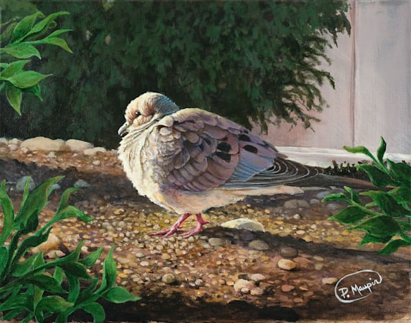 Morning Dove Art by Pete Maupin