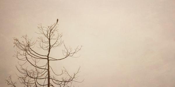 Tree Top Tweety