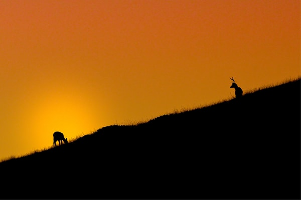 Sunset and Deer on the Pacific Coast