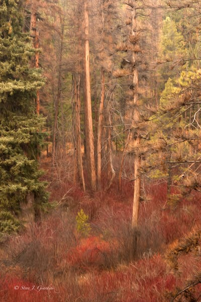 Shevlin Forest Abstract (1810102ABND8) Stylized Photograph for Sale as a Fine Art Print