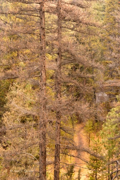 Shevlin Path Abstract (1810101ABND8) Stylized Photograph for Sale as a Fine Art Print