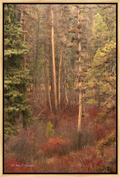 Shevlin Forest Abstract (1810102ABND8) Stylized Photograph for Sale as Fine Art Print