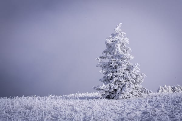 Lone Winter Tree Photograph for Sale as Fine Art