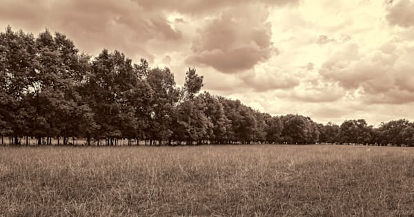 """Tree Line"" 34"" x 18"" Limited Edition of Ten"