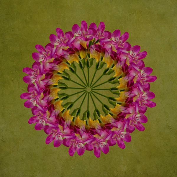Fushia Wreath