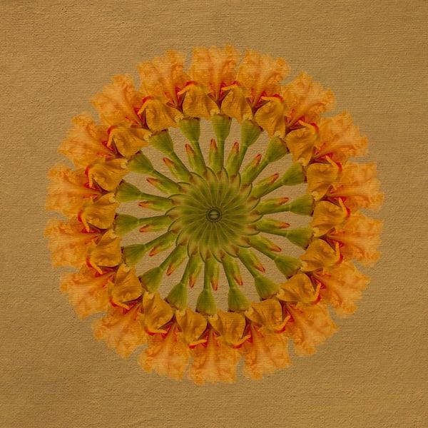 Wheel of Gold