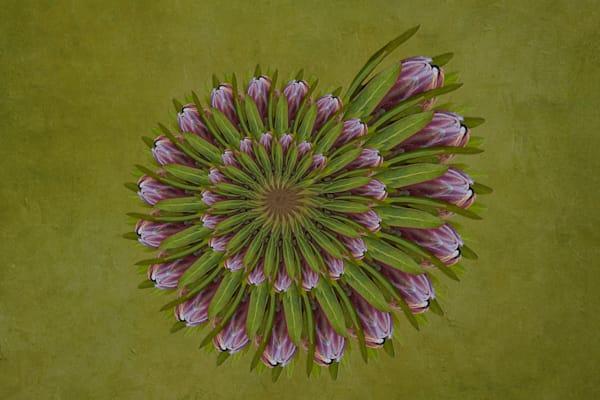 Queen Ice Protea