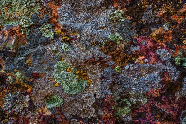 Lichen Explosion