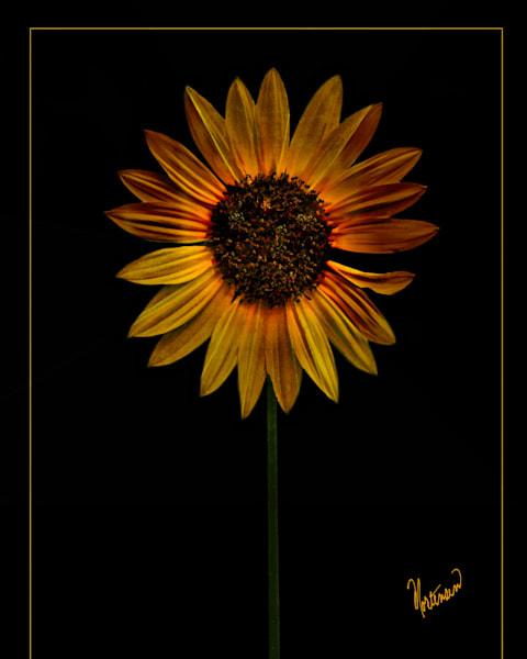 Flowers Sunset Art | FortMort Fine Art
