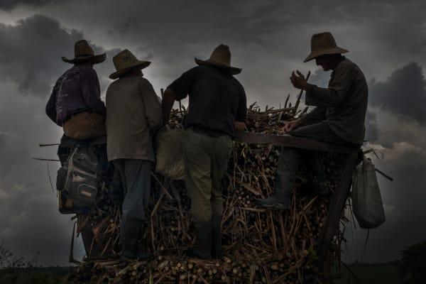 Cuba Sugar Cane Wagon