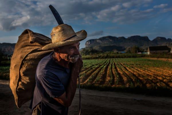 Cuba Sugar Cane Worker