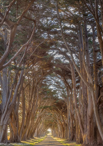 Cypress Sunrise Art | The Carmel Gallery