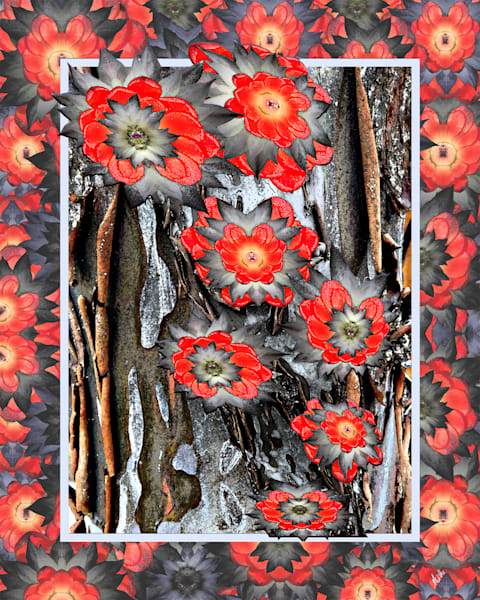 Spring Cactus on Juniper Bark print of photographs transformed as digital art for sale by Maureen Wilks