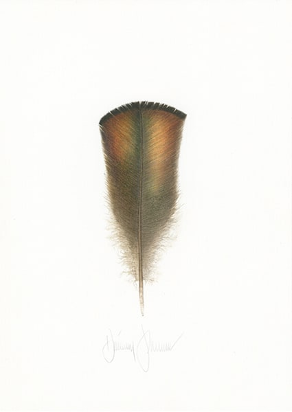 Osceola Wild Turkey Feather