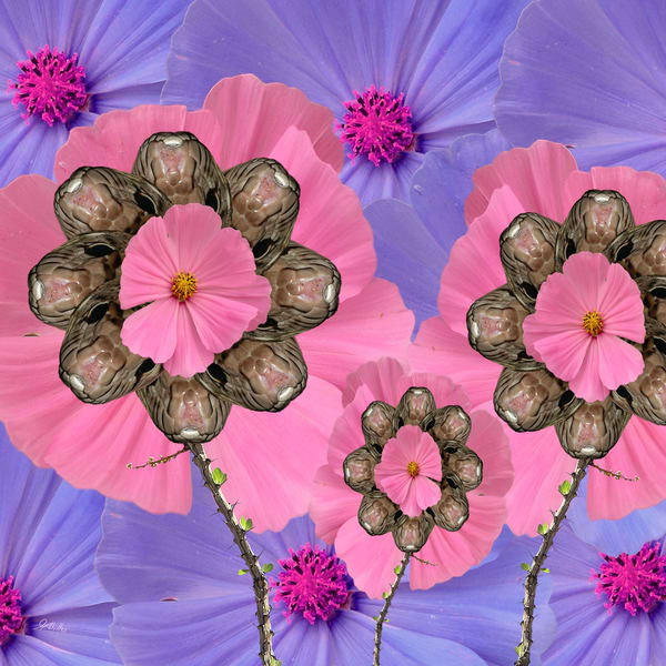 Cosmos No. 5 print of photographs transformed into digital art for sale by Maureen Wilks