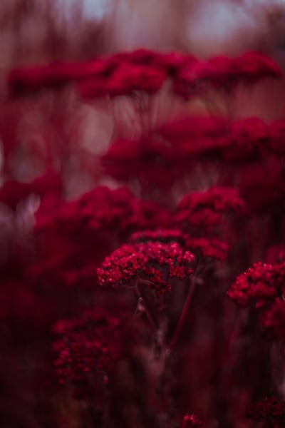 Abstract Sedums Photography Art | Sage & Balm Photography