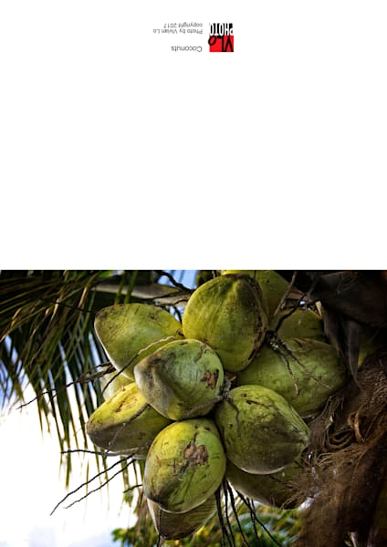Coconuts - note card