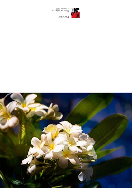 Plumeria - blank note card