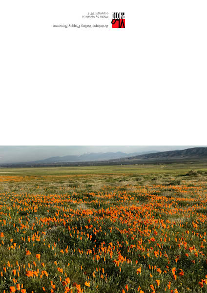 Antelope Valley Poppy Reserve - blank note card