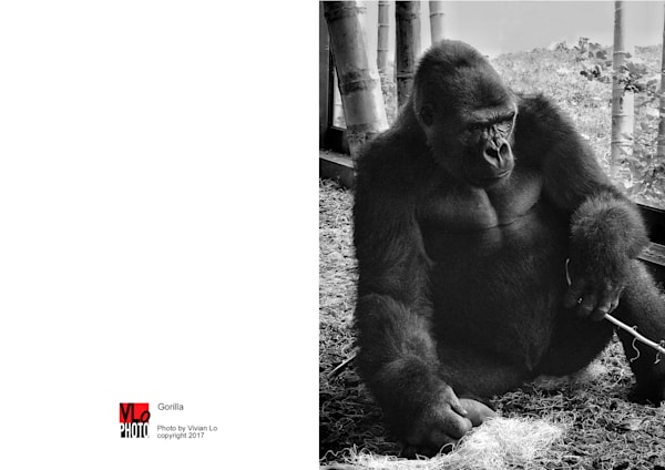 Gorilla - blank note card