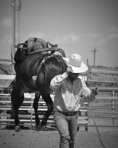 Photograph of a mule bucking as the cowboy walks away for sale as Fine Art