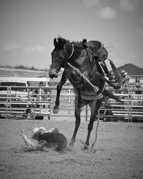 Photograph of a cowboy on the ground after being bucked off a mule for sale as fine art