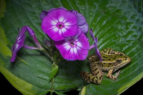 Frog and Flowers 01