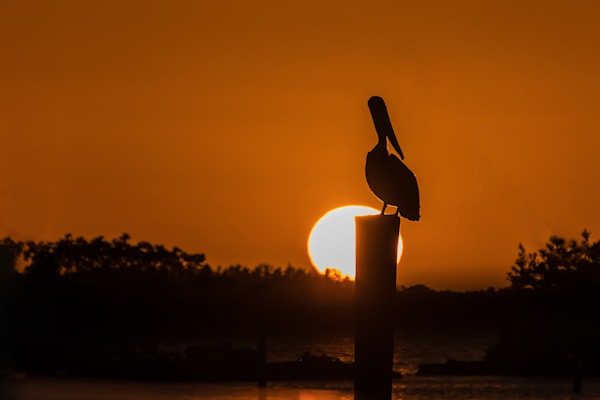 Pelican Sunset - Scenic Photography | William Drew