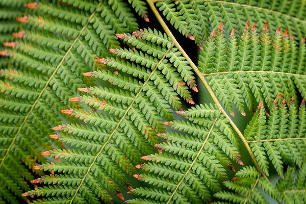 fern plants with brown leaves