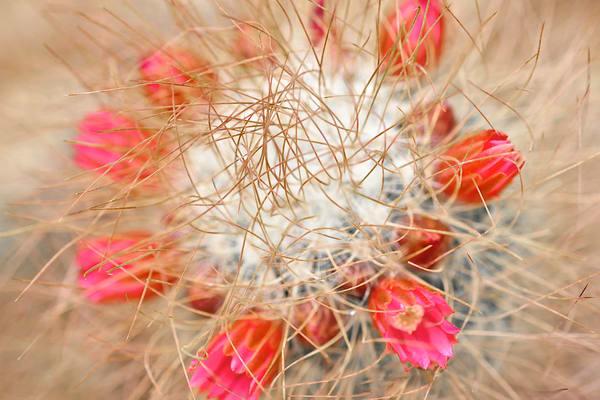 Thorny cactus and flowering cactus