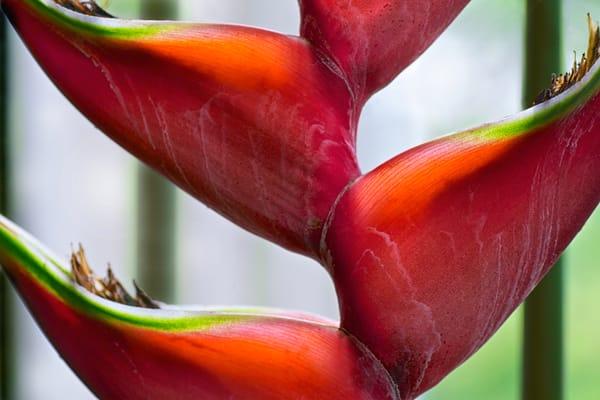 botanical plants photography | Brad Oliphant Photography