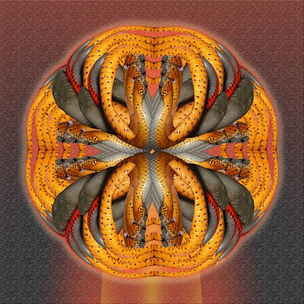 Ringneck Cross print of photographs of Ringneck Snake transformed into digital art for sale as print by Maureen Wilks