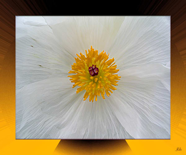 Prickly Poppy print transformed into digital art for sale by Maureen Wilks