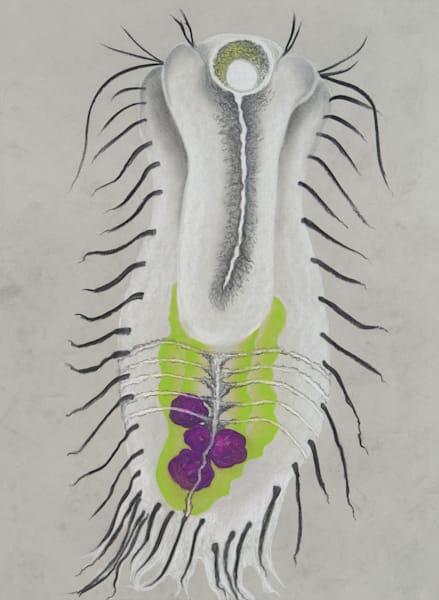 Gastrotricha