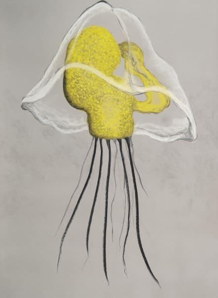 Owenia Collaris Mitraria Larva
